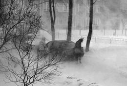Schneesturm / ***
